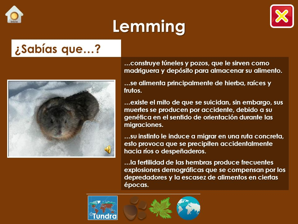 Lemming ¿Sabías que… Tundra