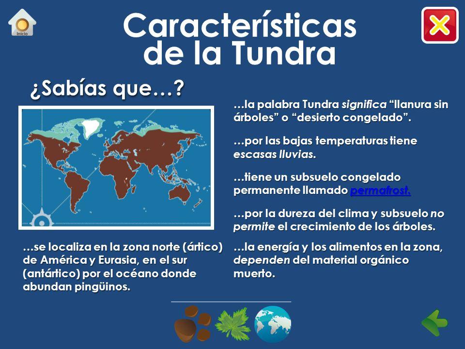 Características de la Tundra