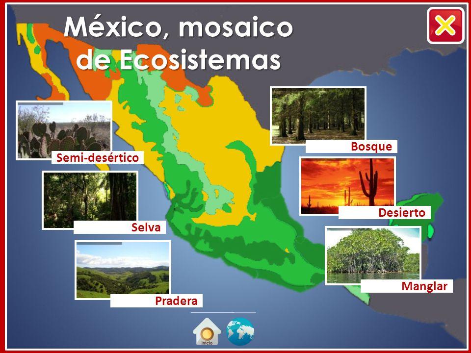 México, mosaico de Ecosistemas