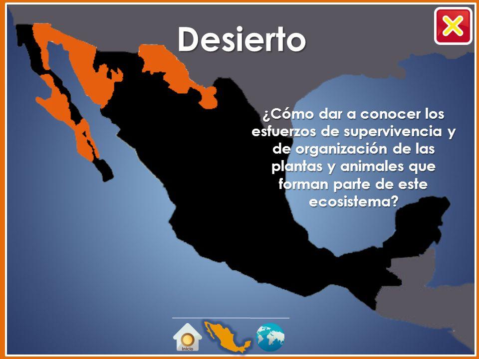 Desierto ¿Cómo dar a conocer los esfuerzos de supervivencia y de organización de las plantas y animales que forman parte de este ecosistema