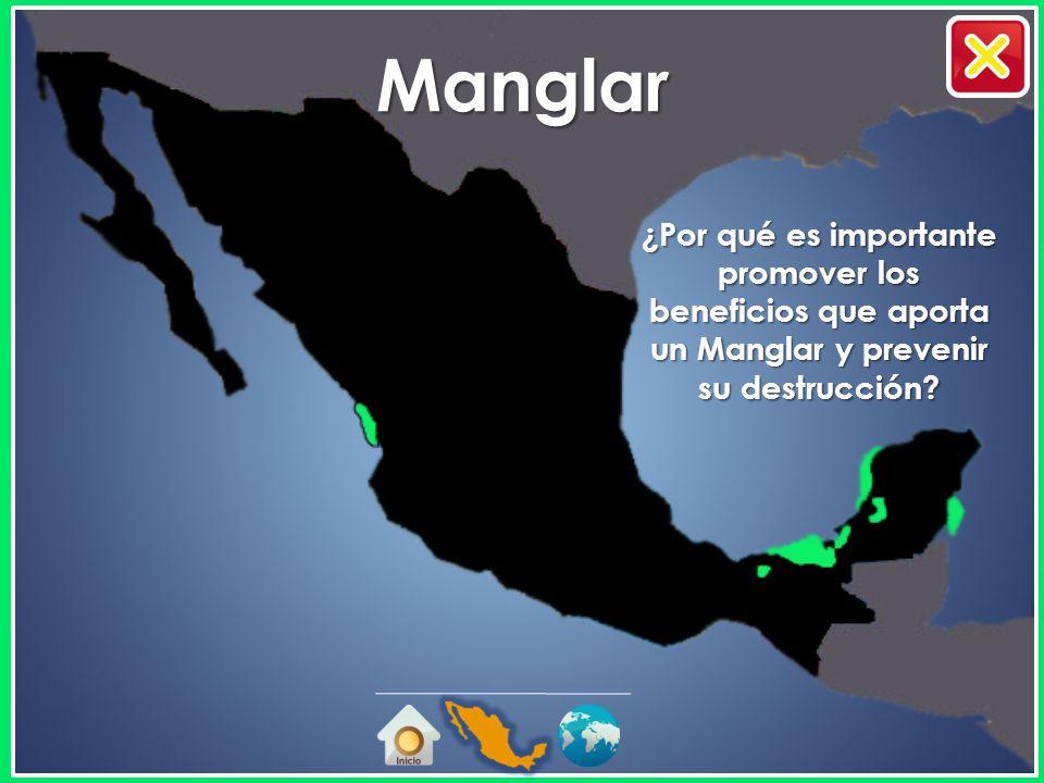 Manglar ¿Por qué es importante promover los beneficios que aporta un Manglar y prevenir su destrucción