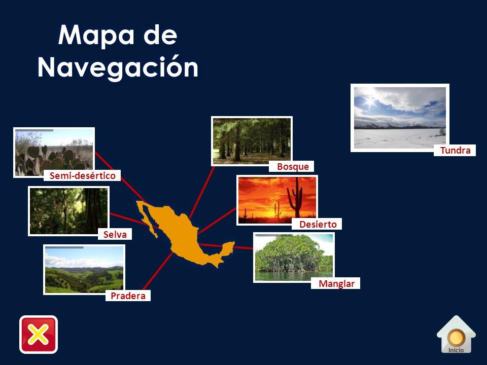 Mapa de Navegación Tundra Bosque Semi-desértico Desierto Selva Manglar