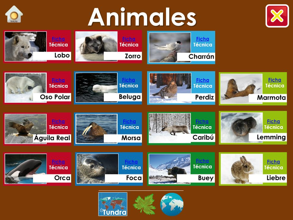 Animales Tundra Ficha Técnica Ficha Técnica Ficha Técnica