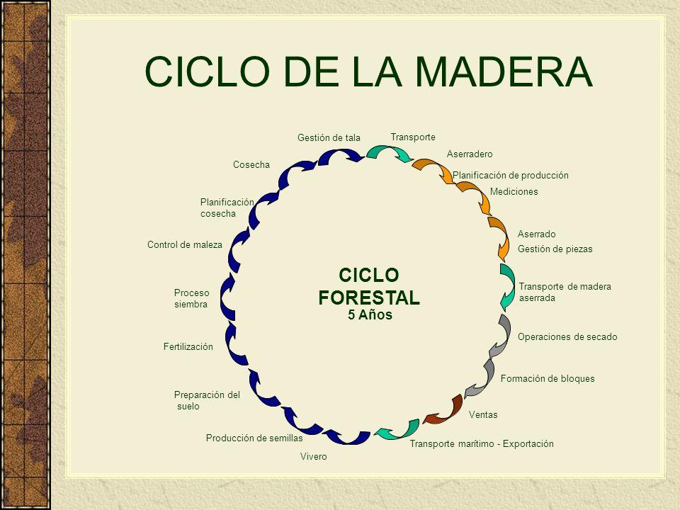 CICLO DE LA MADERA CICLO FORESTAL 5 Años Gestión de tala Transporte