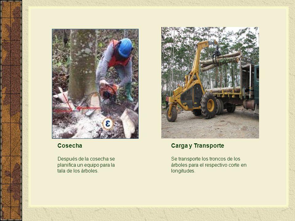 Cosecha Carga y Transporte