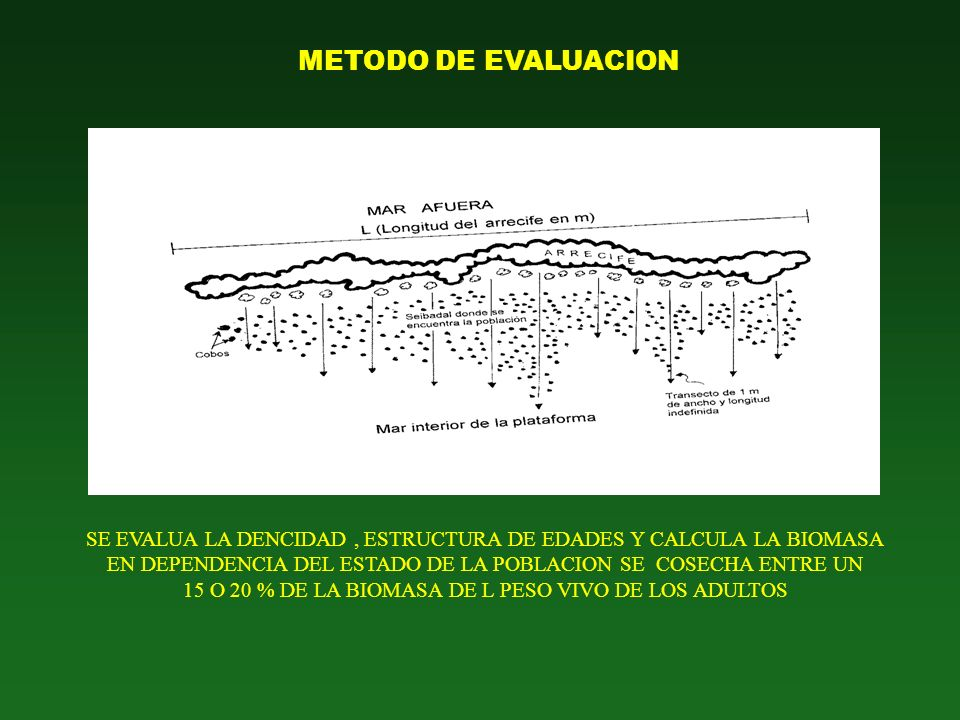 METODO DE EVALUACION SE EVALUA LA DENCIDAD , ESTRUCTURA DE EDADES Y CALCULA LA BIOMASA.