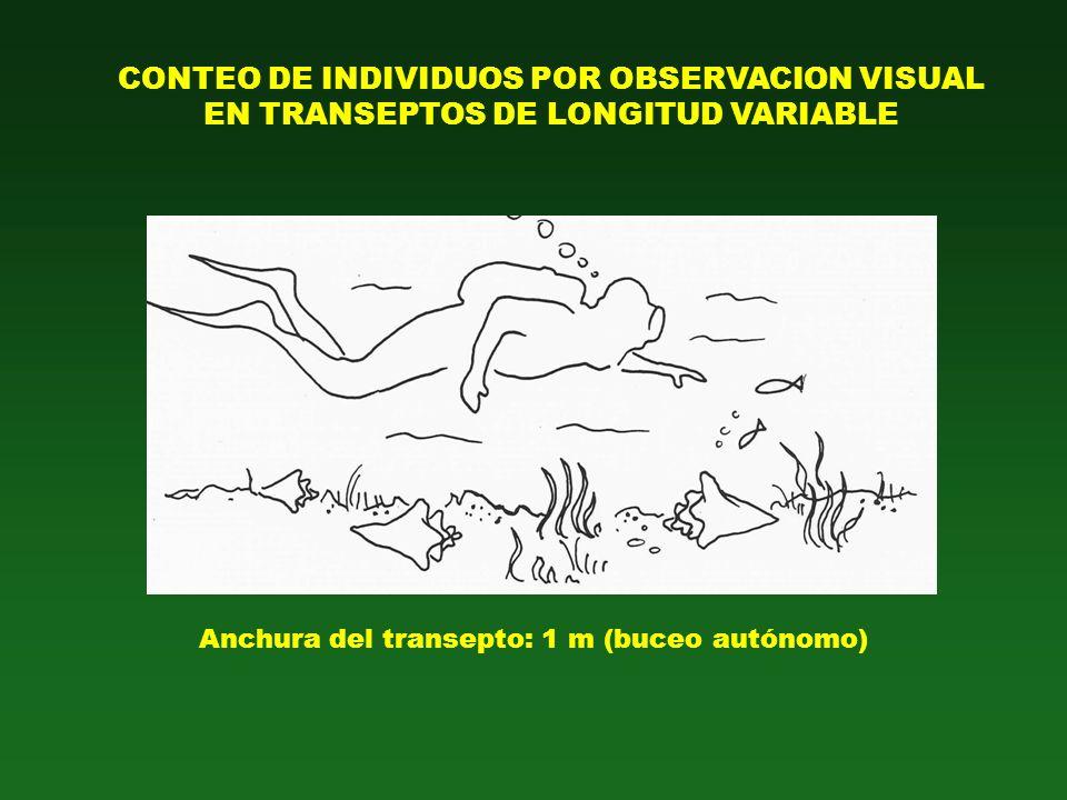 CONTEO DE INDIVIDUOS POR OBSERVACION VISUAL