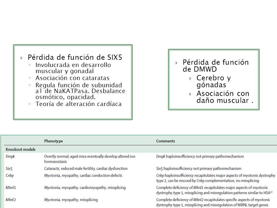Pérdida de función de SIX5 Pérdida de función de DMWD