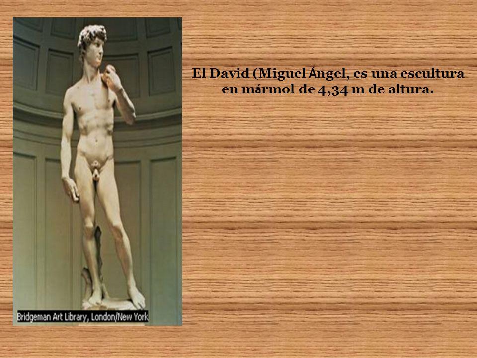 El David (Miguel Ángel, es una escultura en mármol de 4,34 m de altura.