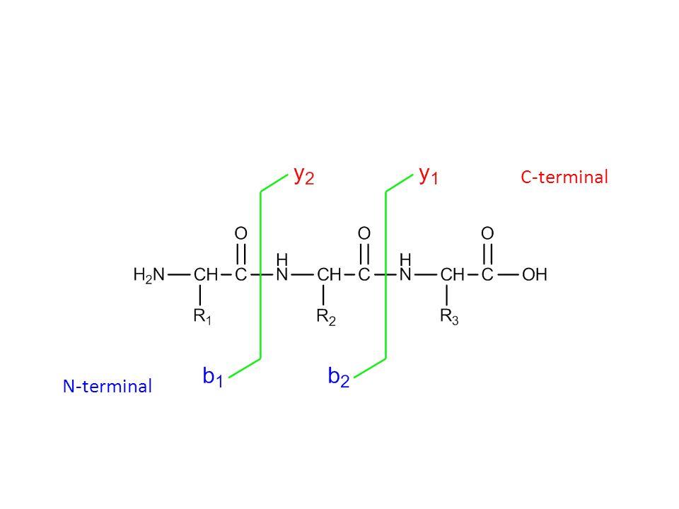 C-terminal N-terminal