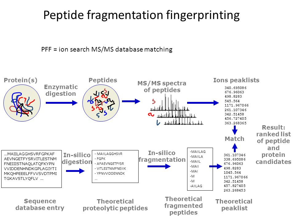 Peptide fragmentation fingerprinting