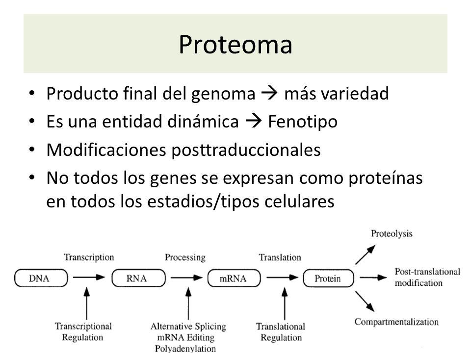 Proteoma Producto final del genoma  más variedad
