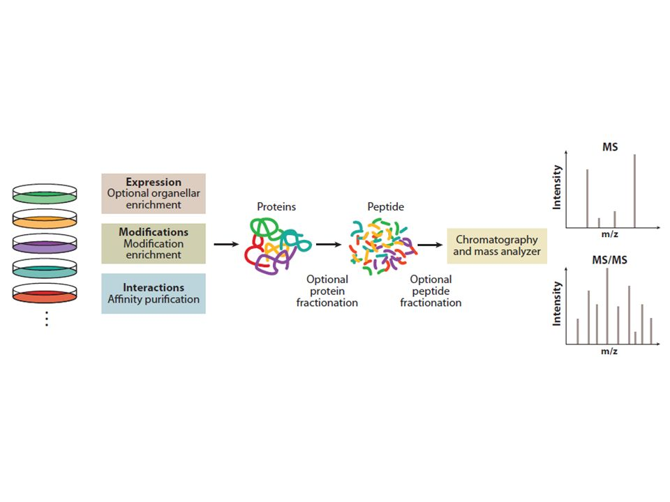 Outline of a generic shotgun proteomics workflow