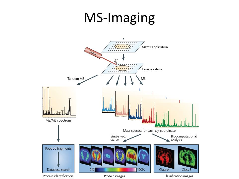 MS-Imaging