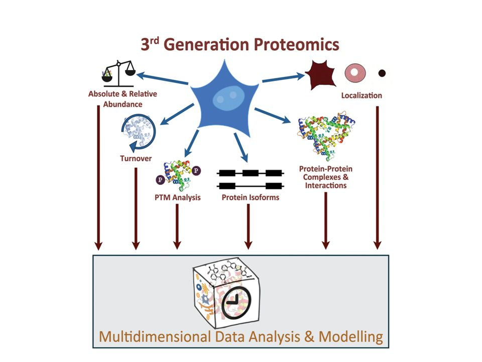 Advancing Cell Biology Through Proteomics in