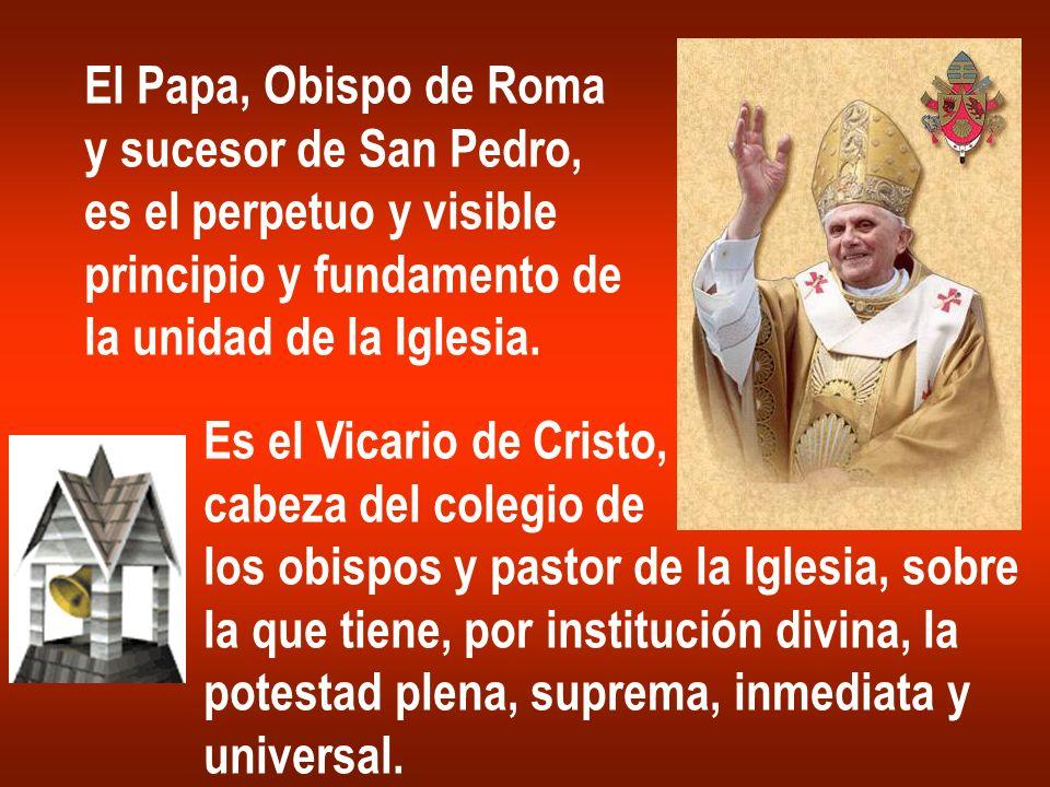 El Papa, Obispo de Roma y sucesor de San Pedro, es el perpetuo y visible. principio y fundamento de.