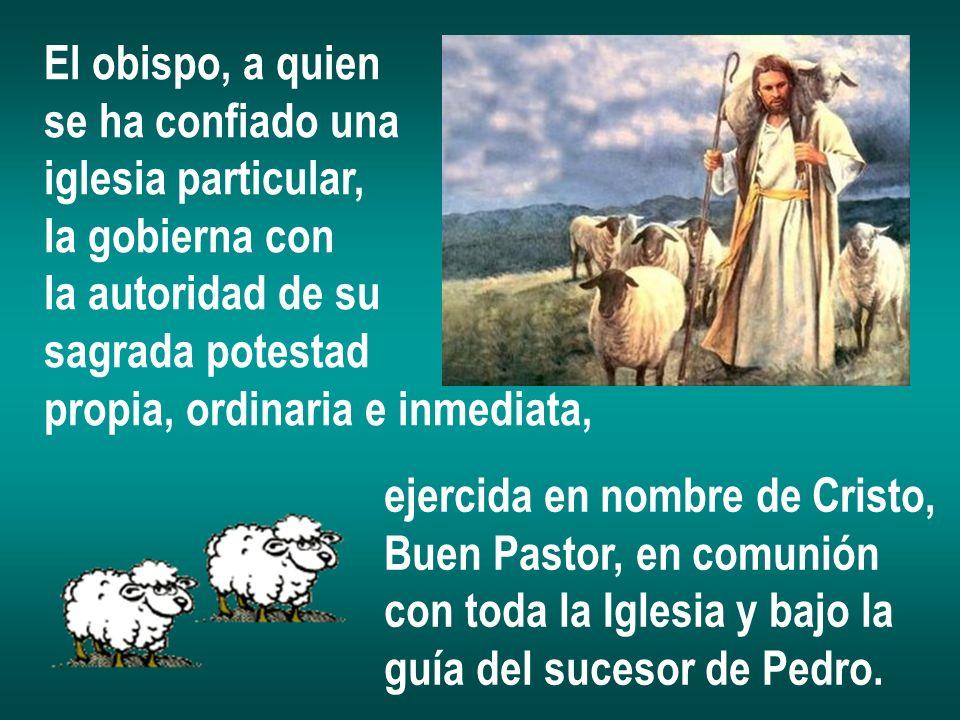 El obispo, a quien se ha confiado una. iglesia particular, la gobierna con. la autoridad de su. sagrada potestad.