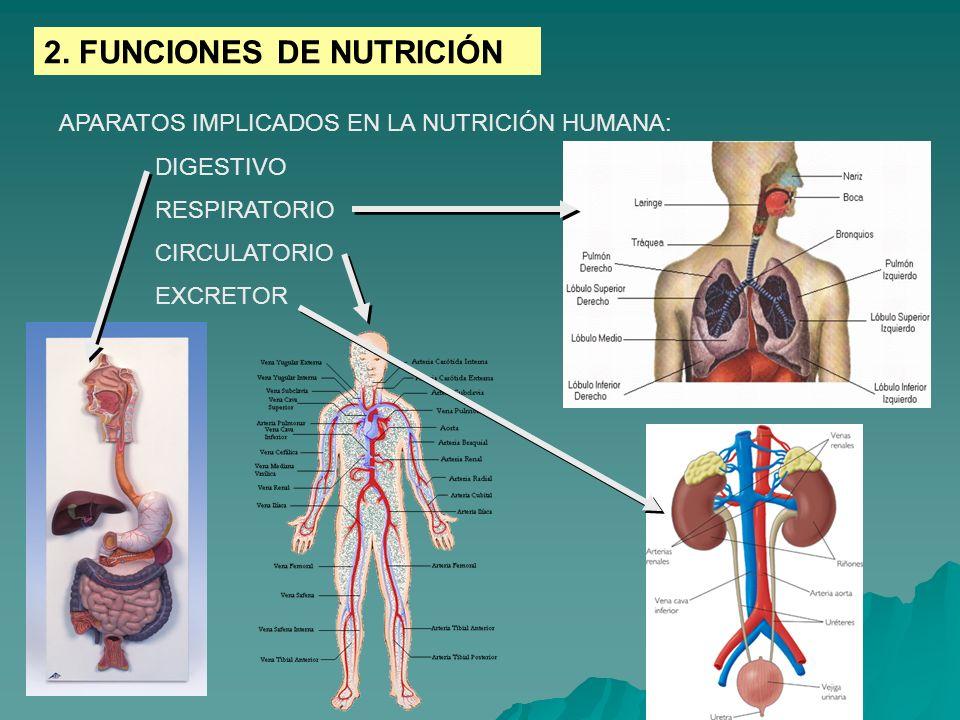 2. FUNCIONES DE NUTRICIÓN