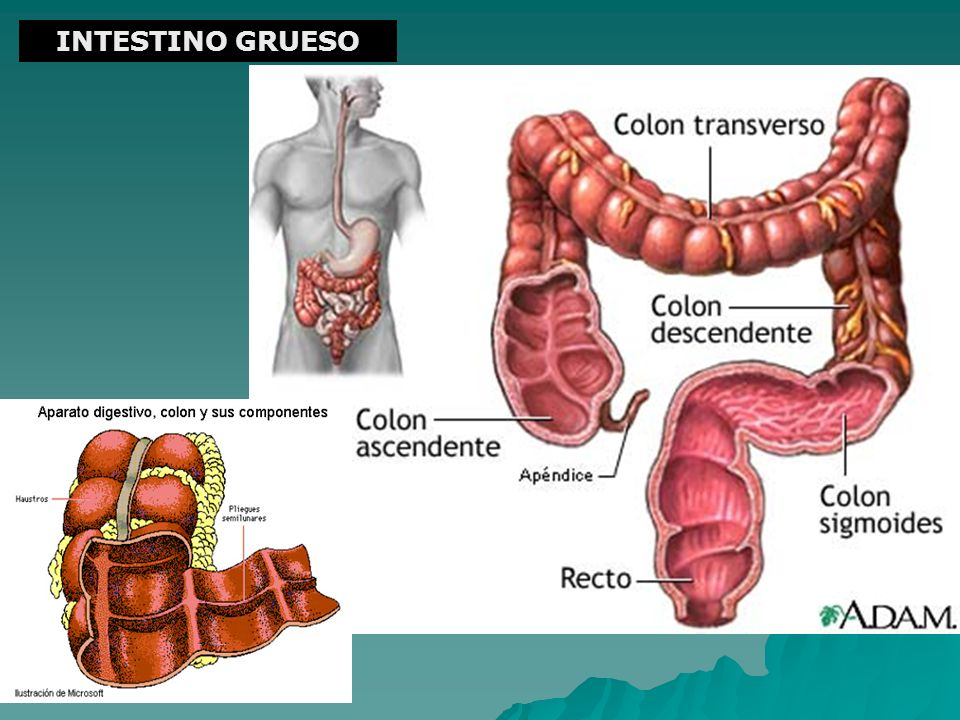 INTESTINO GRUESO