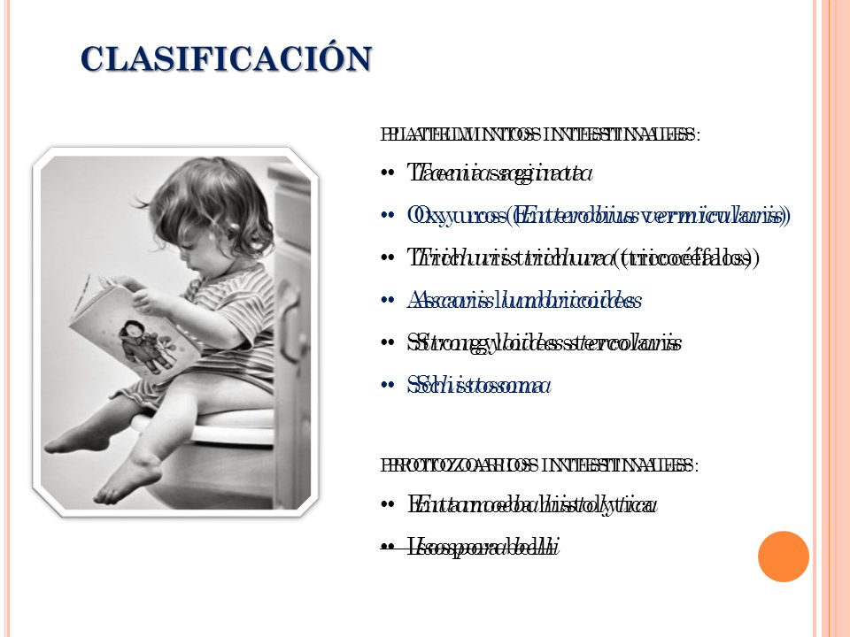 CLASIFICACIÓN Taenia saginata Oxyuros (Enterobius vermicularis)