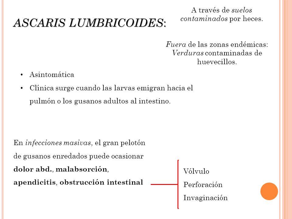 ASCARIS LUMBRICOIDES: