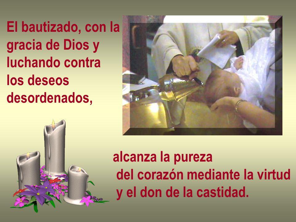 El bautizado, con lagracia de Dios y. luchando contra. los deseos. desordenados, alcanza la pureza.