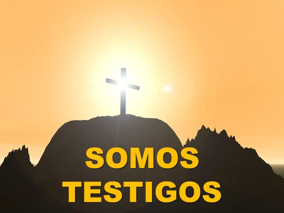 SOMOS TESTIGOS