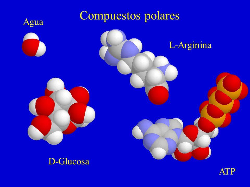 Compuestos polares Agua L-Arginina D-Glucosa ATP