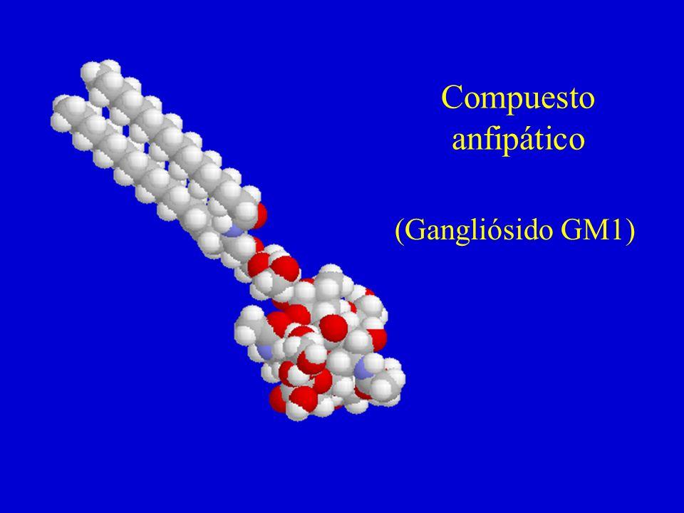 Compuesto anfipático (Gangliósido GM1)