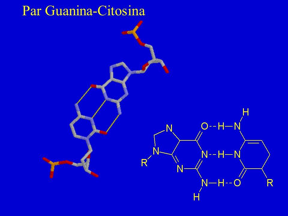 Par Guanina-Citosina