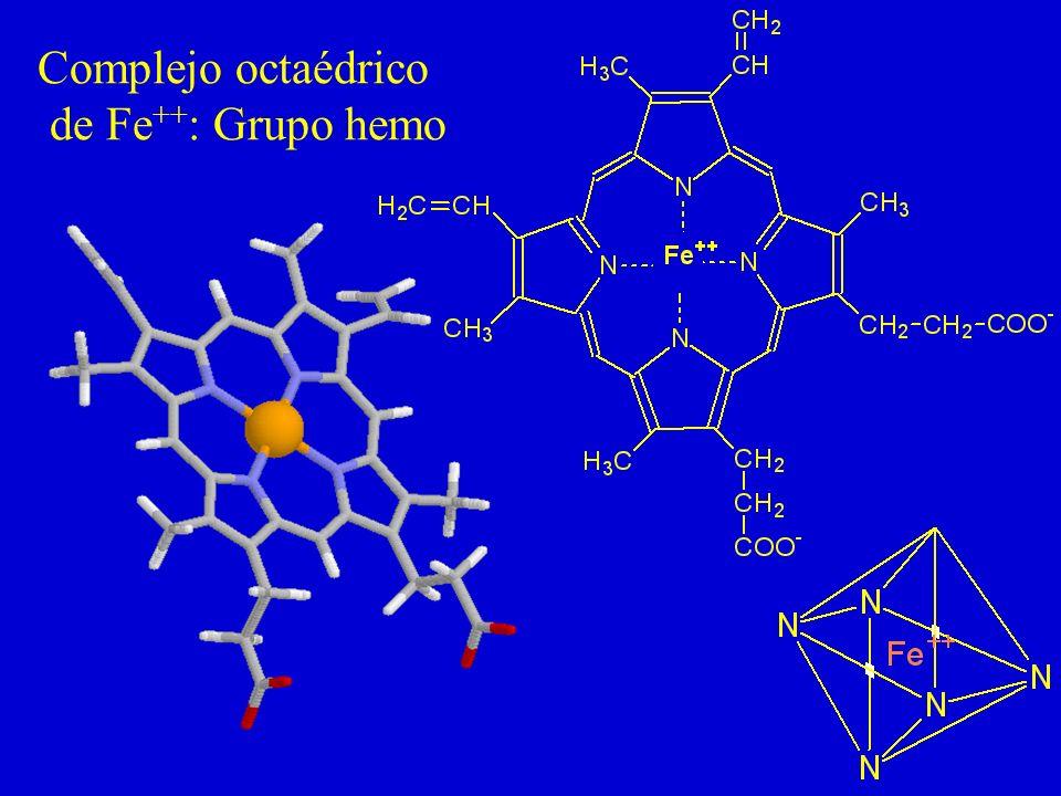 Complejo octaédrico de Fe++: Grupo hemo