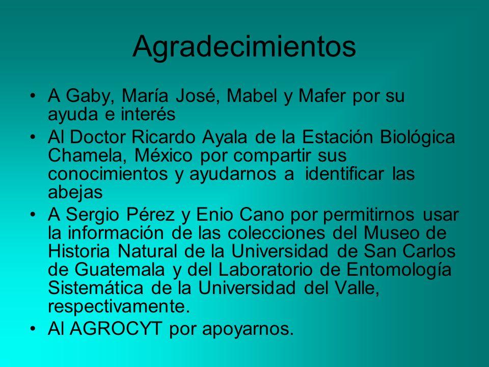 Agradecimientos A Gaby, María José, Mabel y Mafer por su ayuda e interés.