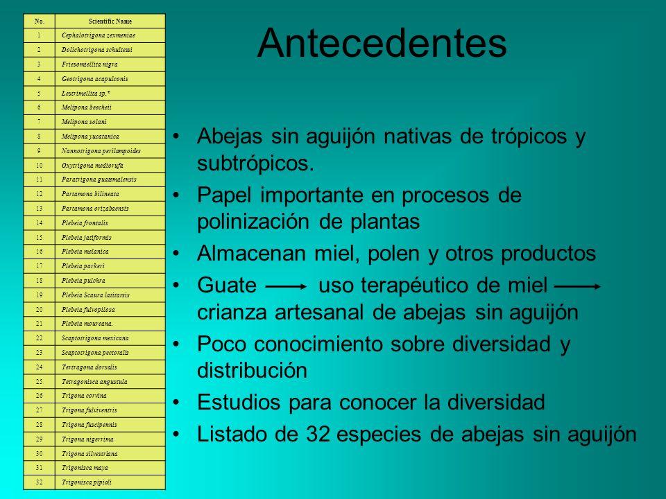 Antecedentes Abejas sin aguijón nativas de trópicos y subtrópicos.