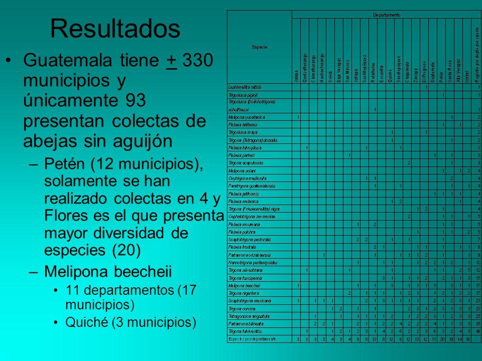 Resultados Guatemala tiene + 330 municipios y únicamente 93 presentan colectas de abejas sin aguijón.
