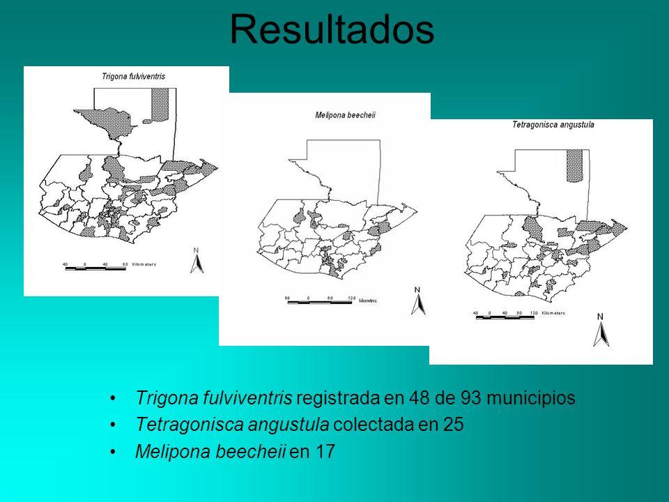 Resultados Trigona fulviventris registrada en 48 de 93 municipios