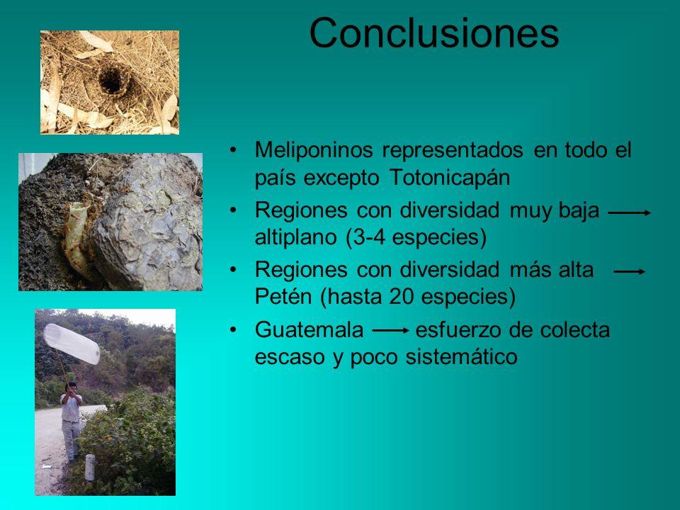 Conclusiones Meliponinos representados en todo el país excepto Totonicapán. Regiones con diversidad muy baja altiplano (3-4 especies)