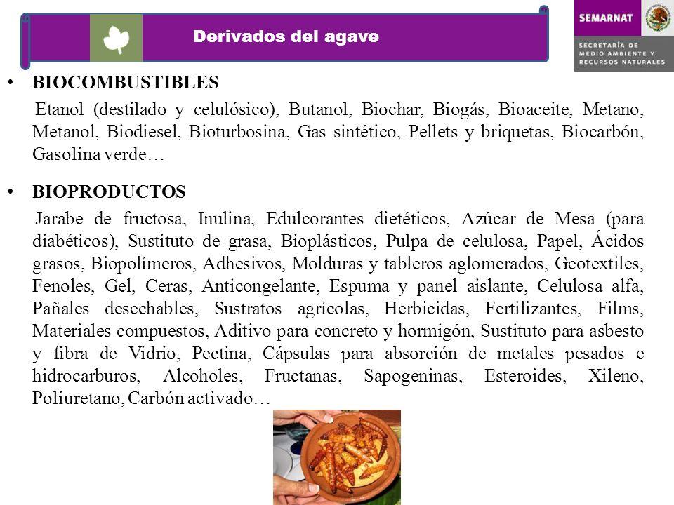 Derivados del agave BIOCOMBUSTIBLES.