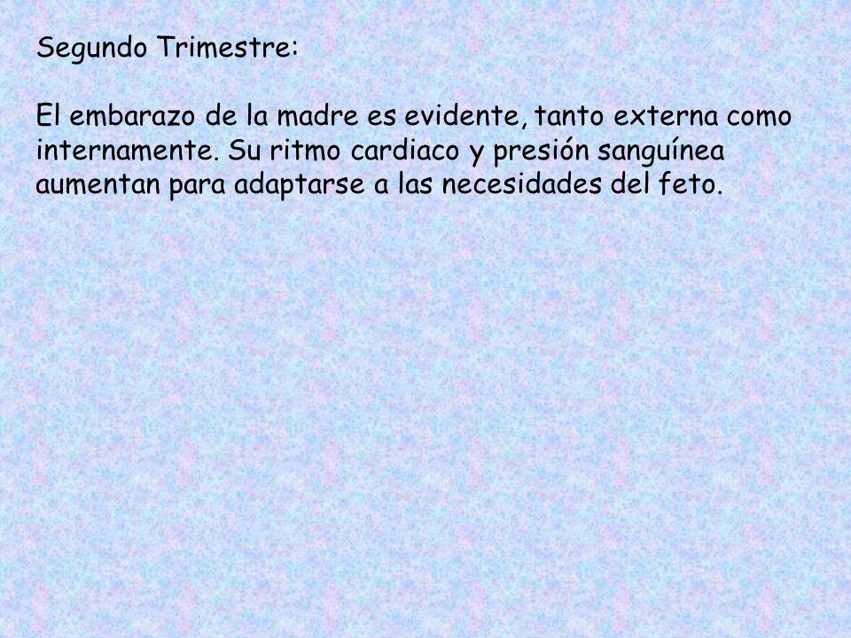 Segundo Trimestre: