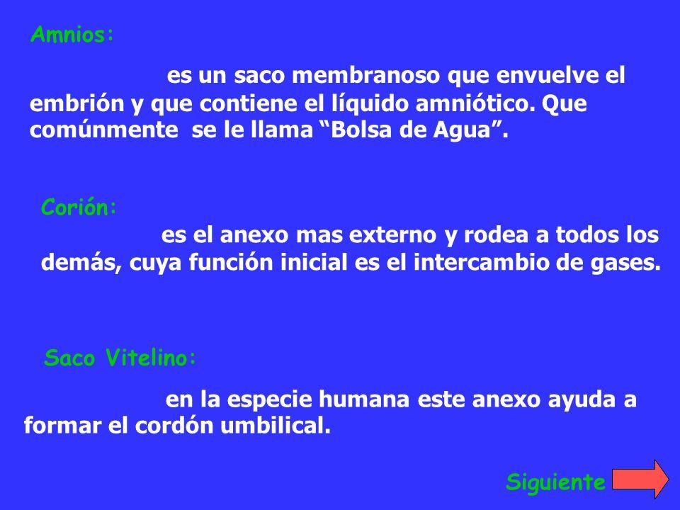 Amnios: es un saco membranoso que envuelve el embrión y que contiene el líquido amniótico. Que comúnmente se le llama Bolsa de Agua .