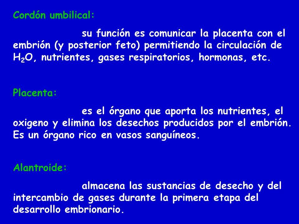 Cordón umbilical: