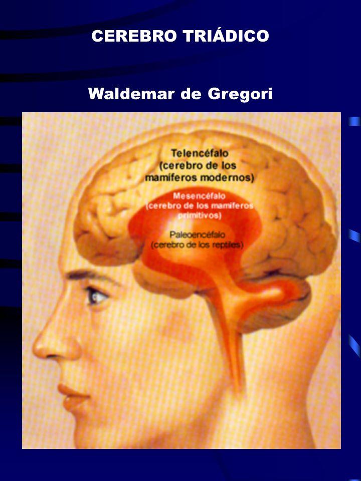 CEREBRO TRIÁDICO Waldemar de Gregori