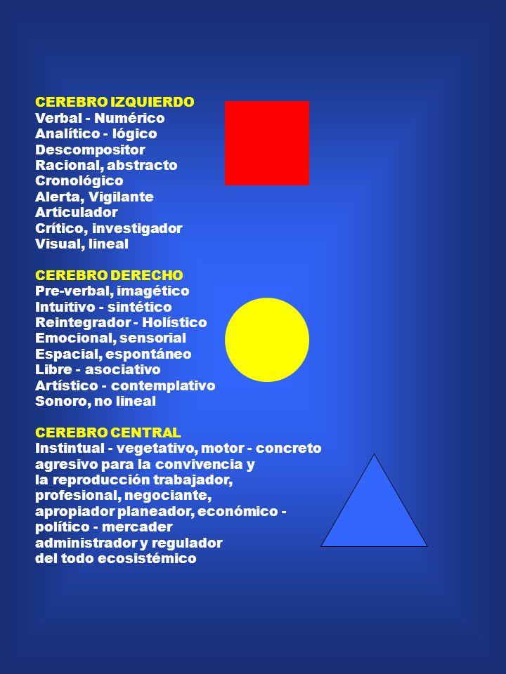 CEREBRO IZQUIERDO Verbal - Numérico. Analítico - lógico. Descompositor. Racional, abstracto. Cronológico.