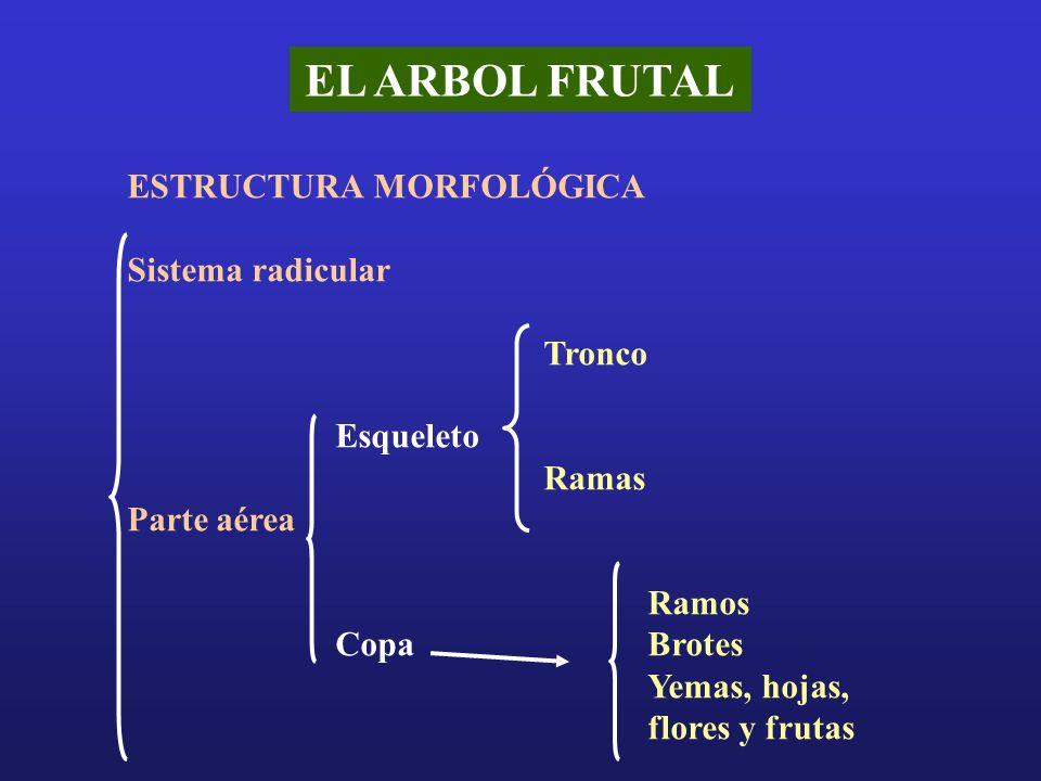 EL ARBOL FRUTAL ESTRUCTURA MORFOLÓGICA Sistema radicular Tronco