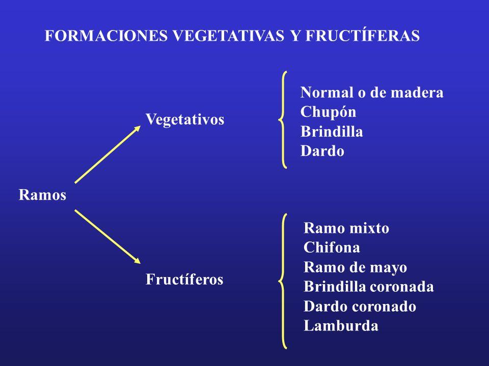 FORMACIONES VEGETATIVAS Y FRUCTÍFERAS