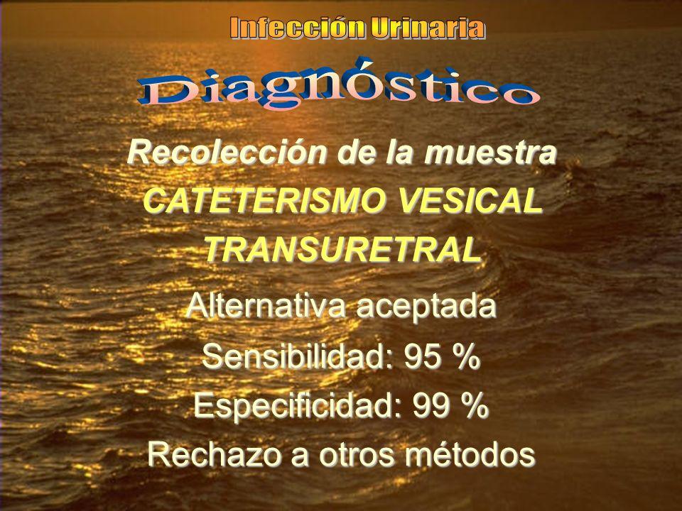 Recolección de la muestra CATETERISMO VESICAL TRANSURETRAL