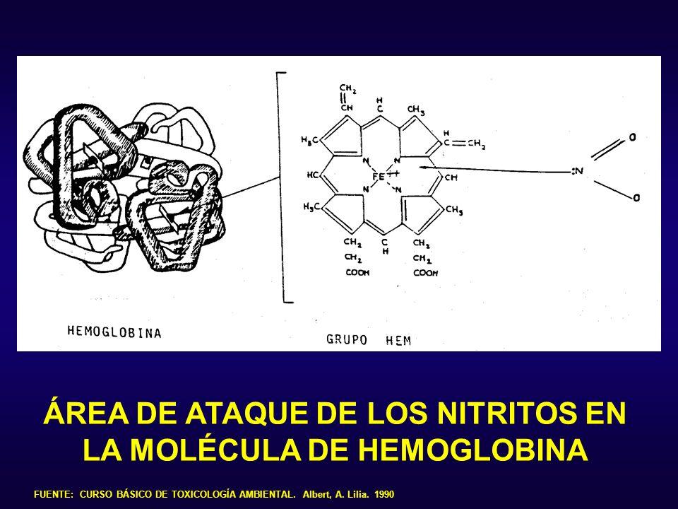 ÁREA DE ATAQUE DE LOS NITRITOS EN LA MOLÉCULA DE HEMOGLOBINA