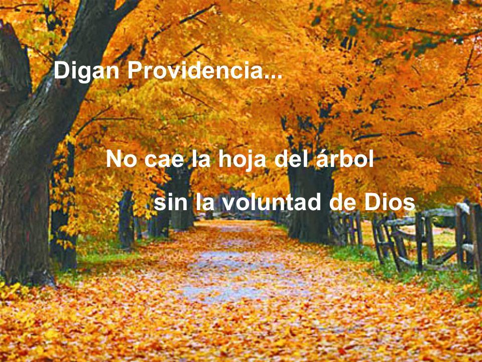Digan Providencia... No cae la hoja del árbol sin la voluntad de Dios