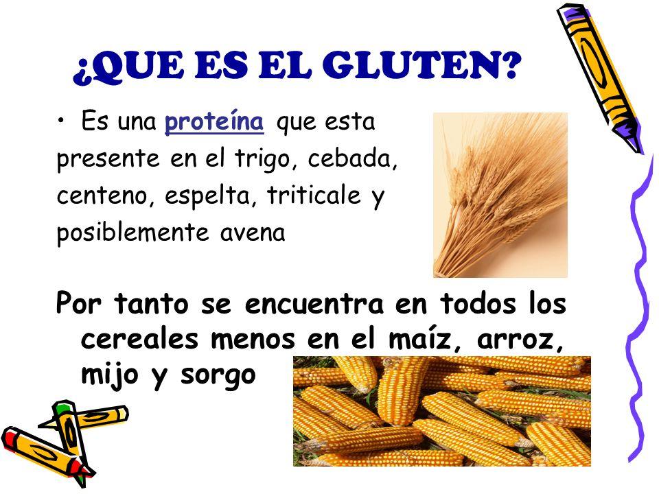 ¿QUE ES EL GLUTEN Es una proteína que esta. presente en el trigo, cebada, centeno, espelta, triticale y.