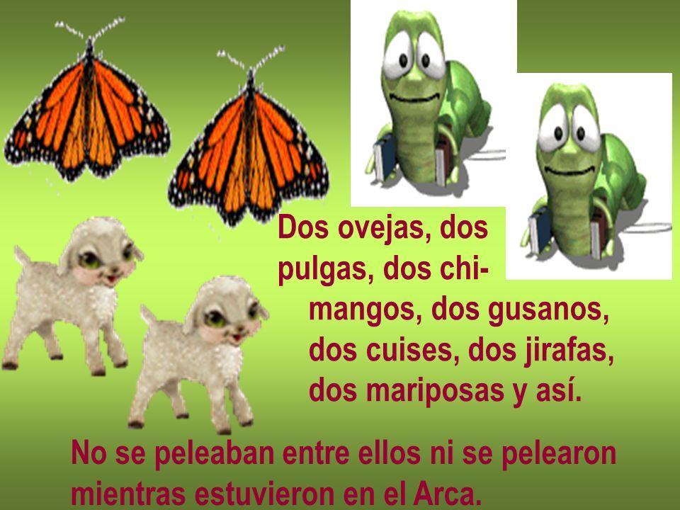 Dos ovejas, dos pulgas, dos chi- mangos, dos gusanos, dos cuises, dos jirafas, dos mariposas y así.
