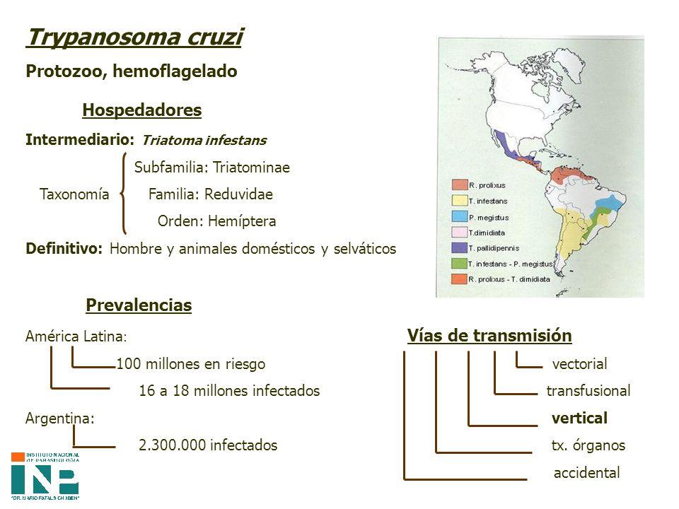 Trypanosoma cruzi Hospedadores Protozoo, hemoflagelado